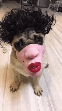 #MyMaskCovers being a dog