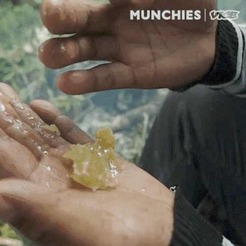 Mad honey is a wild honey that's been documented as a poison, aphrodisiac, powerful medicine and hallucinogenic drug.   We traveled deep into the Annapurna mountains to join a Gurung village on their spring hunt.  https://t.co/G9FLmXAqGY https://t.co/1eV87dWVZQ