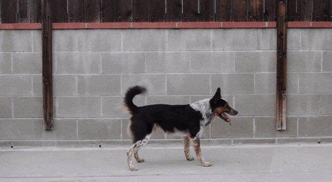 dog backflip GIF