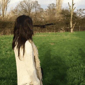 vulture GIF