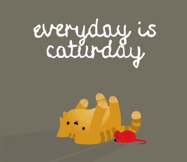 @Caz_Bucket Thank you Chardonnay 😊  Happy #Caturday
