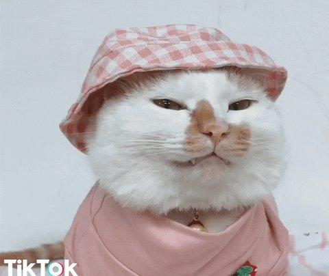 #catsjudgingkellyanne  You done packing yet?