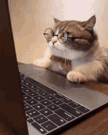 #catsjudgingkellyanne.   Me every time I see @KellyannePolls on my TL