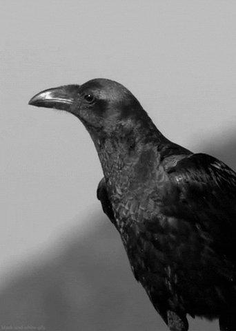 Nevermore  #BALvsBUF