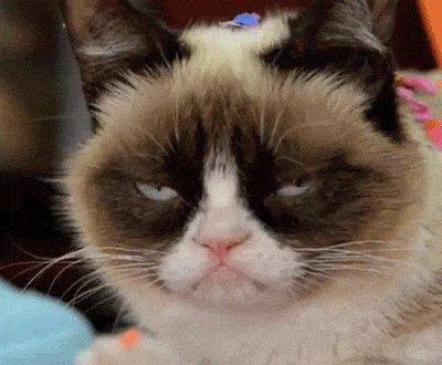 Woke up to the hashtag #catsjudgingkellyanne  .  Gotta say, I'm loving it!