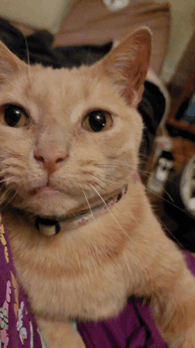 Chi isn't happy with her. #catsjudgingkellyanne