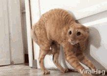 Kellyanne Conway When She Found Out That Claudia Was On Tik Tok 😳 #catsjudgingkellyanne