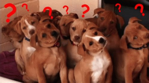 Confused Dogs GIF