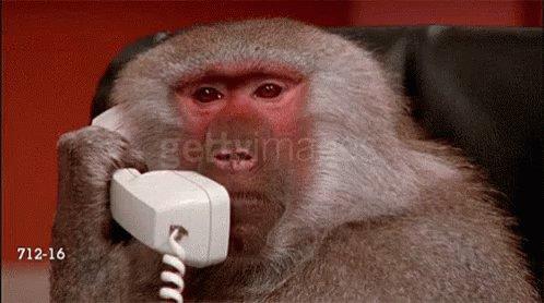 Telling Monkey GIF