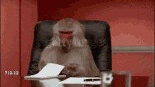 Eat Papers Monkey GIF