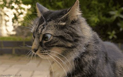 confused cat GIF