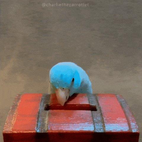 Money Bird GIF