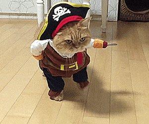 cat costume GIF