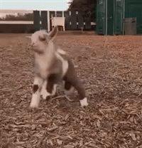 Happy Dancing GIF