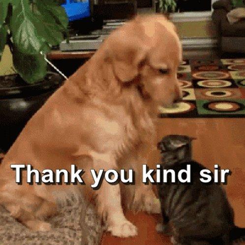 Thank You Kind Sir Ty Kind Sir GIF