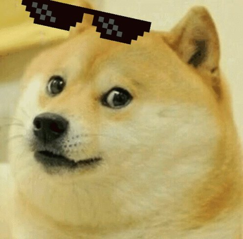 #dogecoin #dogecoin doggos forever! Invest in dogs! Stonks!