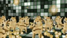 Us the Doge family, swimming in these coins. #dogecoin
