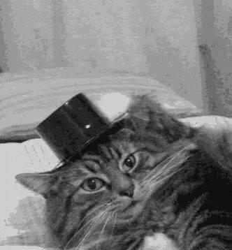 Cat Hat Off GIF