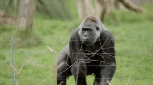 #ReasonsYouJoinedTwitter Because it's cheaper than going to the zoo everyday to watch monkeys fling poo at each other