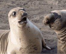 If I had pet seals, I'd name them Approval✅ & Flex💪