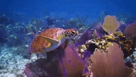 A warming ocean causes thermal stress that bleaches coral and causes infectious disease.  🐢🐠🐙  Sea level rise leads to increases in sedimentation for reefs located near land-based sources of sediment. Sedimentation runoff leads to the smothering of coral.