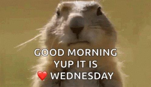 Good Morning ☕️  It's Wednesday! #goodmorning #wednesdaythought #summer #breakfast