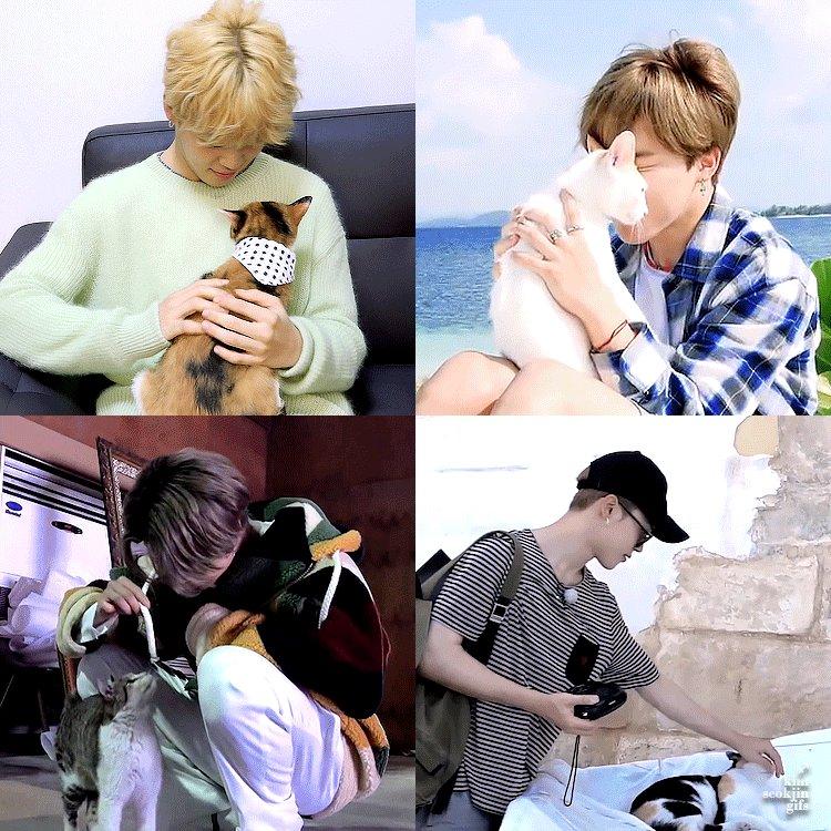 jimin + cats = 🥺 💾:   #JIMIN #지민 #BTS @BTS_twt