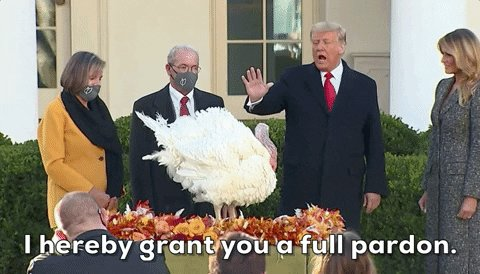 @Phil_Lewis_ The turkeys he pardoned. Remain the only worthy of a pardon by Trump. #Pardons #TrumpPardons #ByeByeTrump