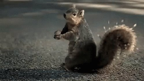 #ASongOrMovieForSmallAnimals Squirrelator (on the chase to get their share of nuts). #ASongOrMovieForSmallAnimals #funny #lol #lmao #lmfao #TagsForLikes #hilarious #laugh #tweegram #fun #friends #wacky #crazy #silly #witty #instahappy @NationalDayCal #SquirrelsAppreciationDay