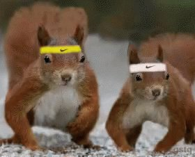 #SquirrelsAppreciationDay Squirrels Run The World #ASongOrMovieForSmallAnimals #funny #lol #lmao #lmfao #TagsForLikes #hilarious #laugh #tweegram #fun #friends #photooftheday #friend #wacky #crazy #silly #witty #instahappy #joke #jokes #joking #epic @NationalDayCal @Nike 🤣😂🤣😂