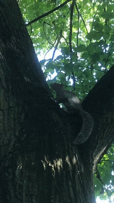 Did you know it's Squirrel Appreciation Day? We would love to see your photos of squirrels in Edinburgh trees! This little squirrel was spotted in the meadows. #SquirrelAppreciationDay!