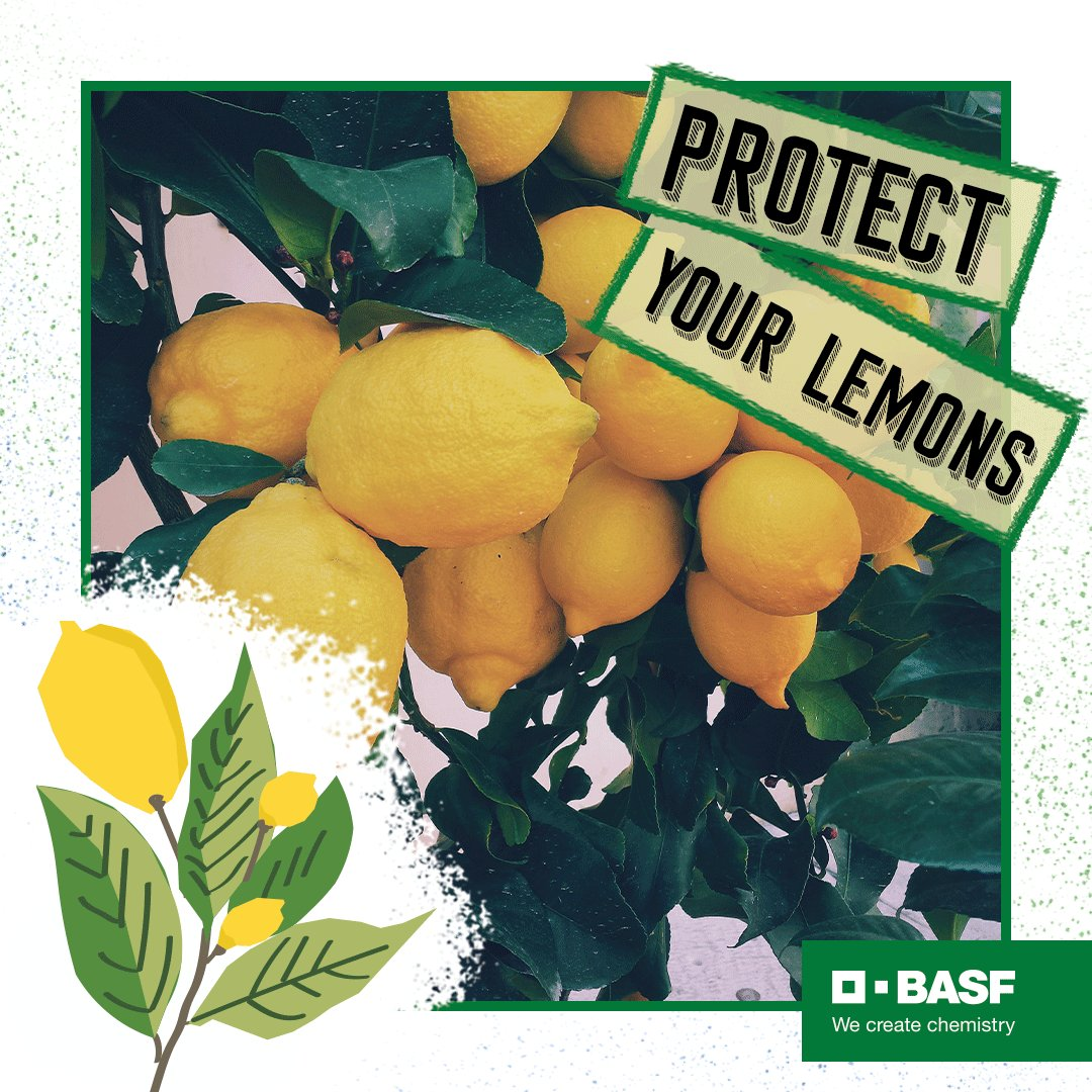 Love your #lemons. Make sure you're protecting them from piercing and sucking insects with help from #Sefina insecticide. With its fast onset action and residual control, it's the best way to show your lemons you care. #BASFDinnerisGrown: