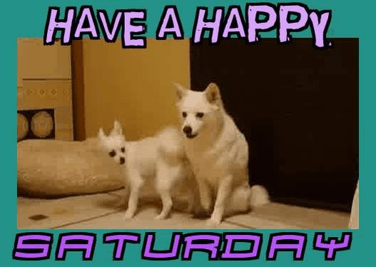 Have a happy Saturday Tweeters😊 Have a great day & stay safe😊👍#newtouemporium #vintage #etsyshop #ebayshop #staysafe #happysaturday #saturdaythoughts #dogs #funnydogs #dogsoftwitter #staysafe #dogvideos #crazydogs #funnyanimals 😊🐶🐕🐾