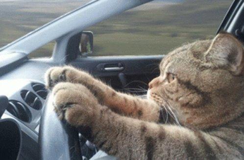 #Caturday #SaturdayMorning #SaturdayVibes #SaturdayMotivation #weekend #cats #driving #transportation