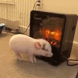 #IOwnARidiculousAmountOf heaters.