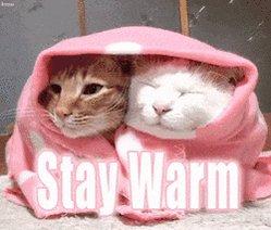 @Percy_BengalCat @alfiecatuk Ooh definitely!! Stay warm 🔥👍😻❤️🐾#SundayThoughts