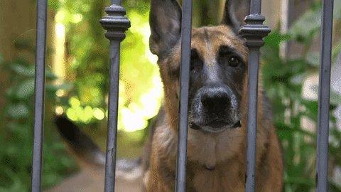 Dogs be barking on Championship Sunday!  Bucs +3.5 Bills +3 Bucs ML / Bills ML parlay (+475) #NFL #ChampionshipSunday #BillsMafia