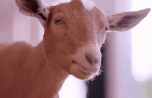 Not a chance that the the #Bucs let GB score eight points. This one is over. The GOAT is headed to another SB. #NFCChampionshipGame #GOAT #NFL #TBvsGB