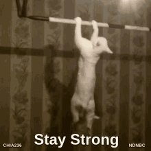 @debswim2010 Stay strong, #FinsUp