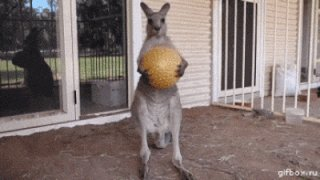 Skippy to Wullamaloo #AussieSongsOrBands