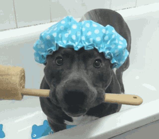 @DonnieWahlberg  If u follow me....I'll give Lumpy a bath. 😋 #loveeternal #followback 😘