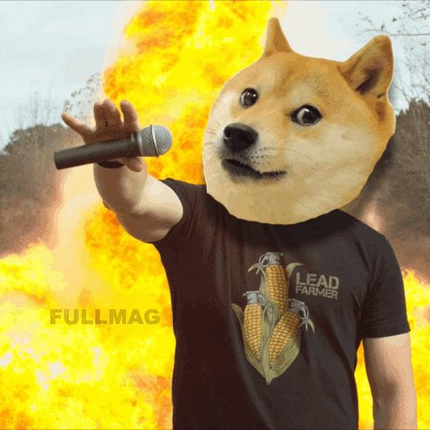 $DOGE running wild again...should have bought some 😑 #DOGECOIN