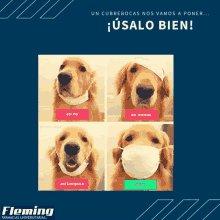 Cubrebocas Fleming Dog GIF