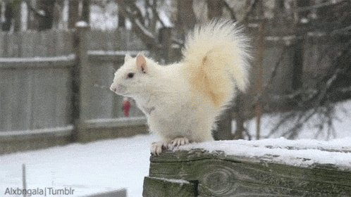 A gif of either a squirrel ...