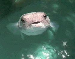 water fish GIF