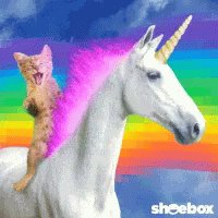 Cat Unicorn GIF
