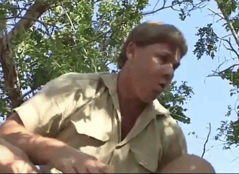 Happy 59th birthday to Steve Irwin