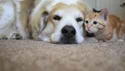 cat and dog GIF