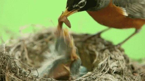 Mama Bird Feeding Baby Bird...