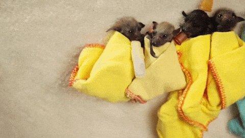 baby bats GIF